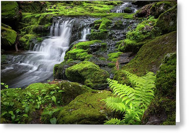 Falls Brook 2016 Greeting Card by Bill Wakeley
