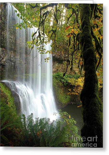Temperate Rain Forest Greeting Cards - Falls Though The Trees Greeting Card by Adam Jewell