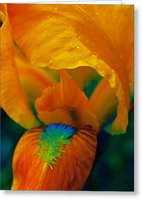 Photographs Digital Art Greeting Cards - False Color Iris 3 Greeting Card by Karen Musick