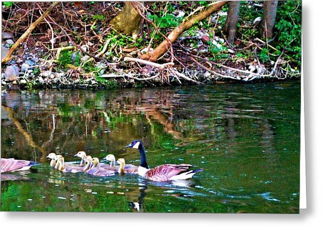 Mother Goose Greeting Cards - Family Fun on Black Creek Greeting Card by Richard Jenkins