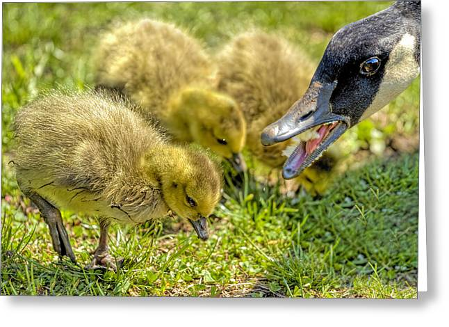 Water Fowl Greeting Cards - Family Picnic Greeting Card by Geraldine Scull