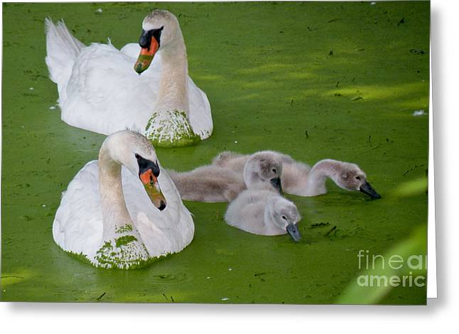 Recently Sold -  - Algae Greeting Cards - Family Time Greeting Card by Cathy Fitzgerald