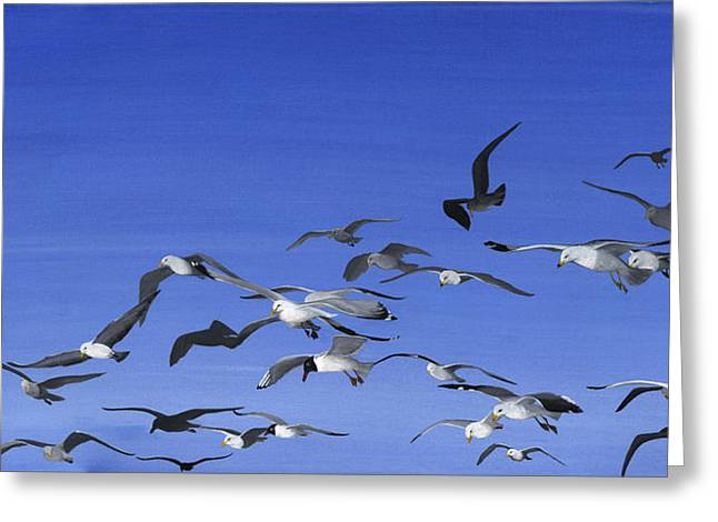 Gulls Greeting Cards - Family Greeting Card by Twyla Francois