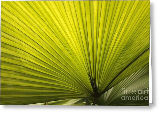 Decor Nature Photo Greeting Cards - Fancy Fan Greeting Card by Carol Groenen
