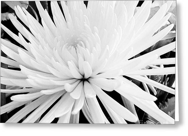 Versatile Greeting Cards - Fancy Flower Greeting Card by Marsha Heiken