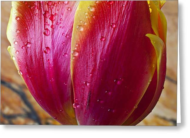 Fancy Tulip Greeting Card by Garry Gay