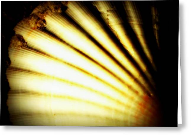 Shell Texture Greeting Cards - Fanning out of blackness Greeting Card by Laurie Pike