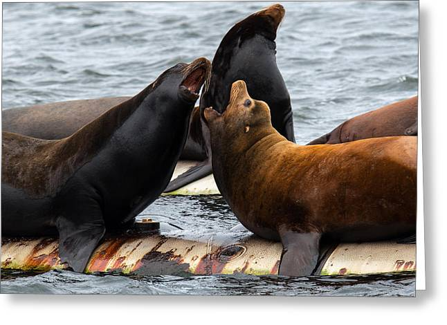 Ocean Mammals Greeting Cards - Fanny Bay Opera Greeting Card by Randy Hall