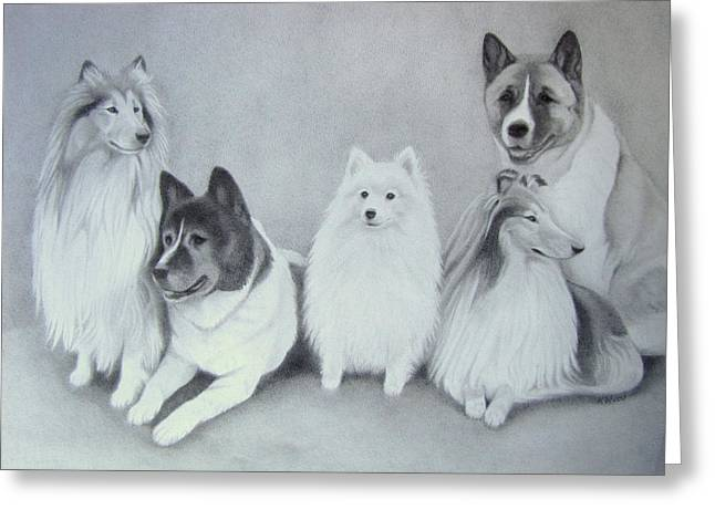 Working Dog Drawings Greeting Cards - Fantail Dogs Greeting Card by Karen Wood