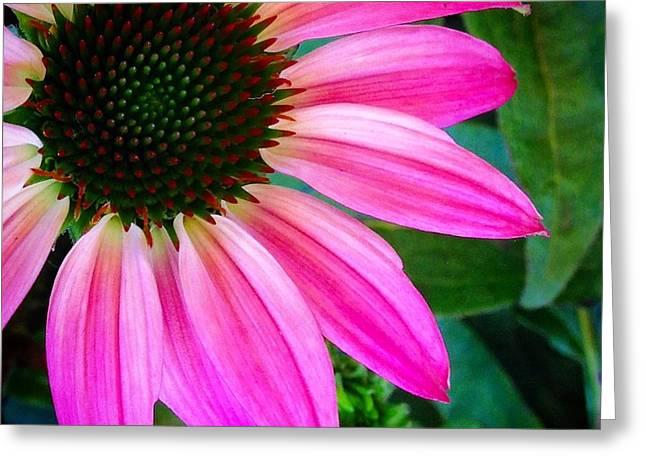 Fantastic Pink Daisy Greeting Card by Polina Brener