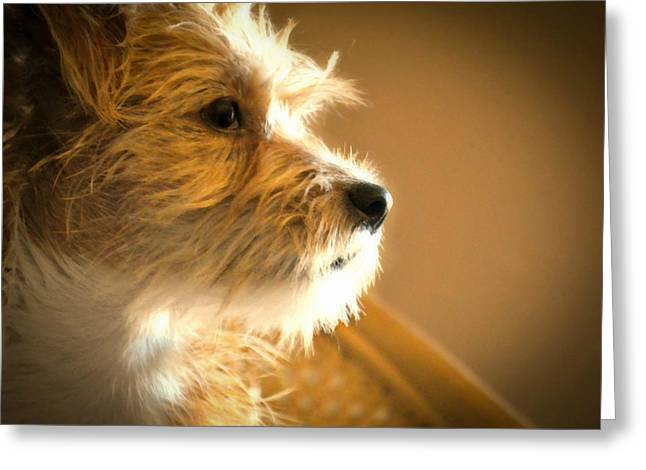Puppy Digital Art Greeting Cards - Far Away Eyes Greeting Card by Wendy Martinez