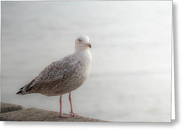 Sea Gulls Greeting Cards - Farewell Greeting Card by Wim Lanclus