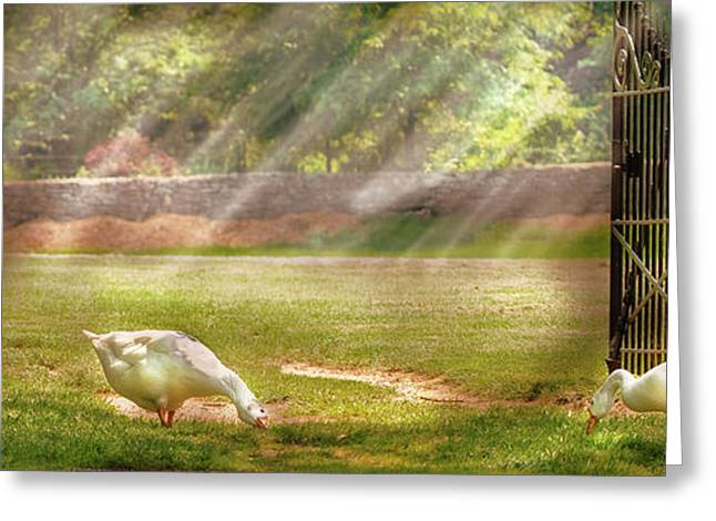 Mother Goose Greeting Cards - Farm - Geese -  Birds of a Feather - Panorama Greeting Card by Mike Savad