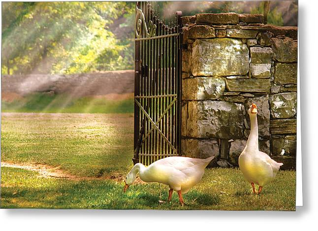 Farm - Geese -  Birds of a Feather Greeting Card by Mike Savad