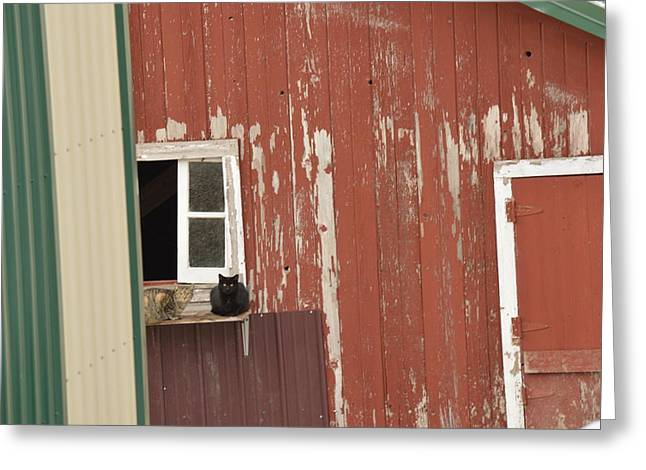 Pairs Greeting Cards - Farm Cats Greeting Card by Jordyn Henze