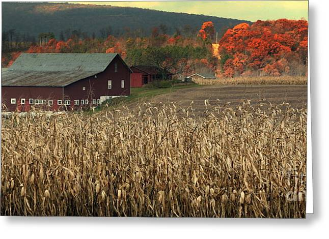 Chuck Kuhn Greeting Cards - Farm Fall Colors Greeting Card by Chuck Kuhn