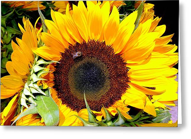 Farm Stand Greeting Cards - Farm Stand Sunflowers #3 Greeting Card by Ed Weidman