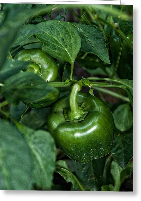 Farming Green Peppers Greeting Card by Thomas Woolworth