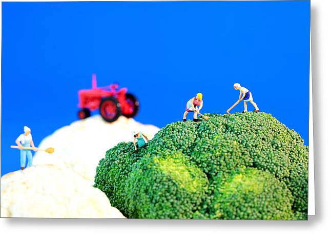Farmers Field Greeting Cards - Farming on broccoli and cauliflower II Greeting Card by Paul Ge
