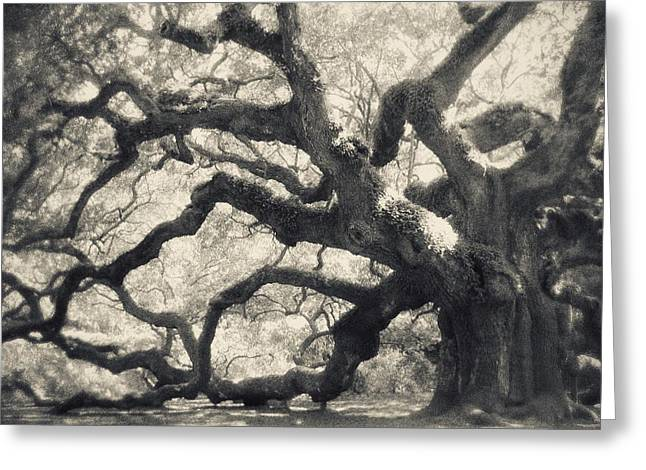 Angel Oak Photographs Greeting Cards - Father Time Greeting Card by Amy Tyler