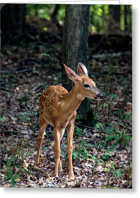 Fawn Greeting Card by Michael Demagall