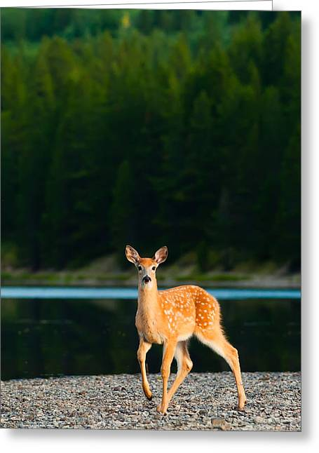 Waiting Greeting Cards - Fawn Greeting Card by Sebastian Musial