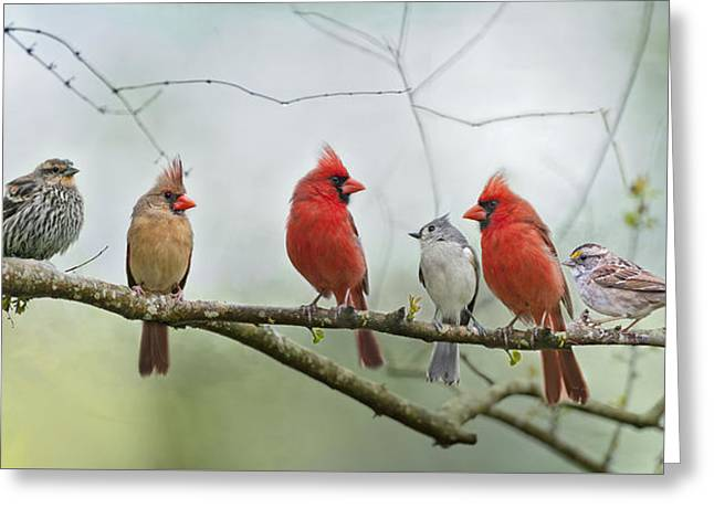 Birds On A Branch Greeting Cards - Fear Not Little Flock Greeting Card by Bonnie Barry