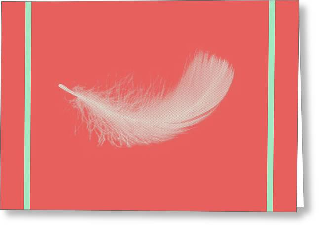Cushion Greeting Cards - Feather Greeting Card by Bonnie Bruno