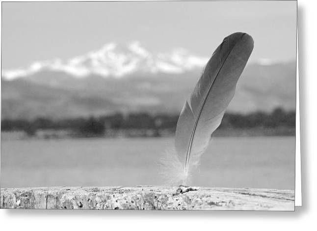 Feather In Black And White Greeting Card by James BO  Insogna