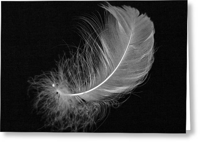 Minimal Minimalistic Greeting Cards - Feather Greeting Card by Joana Kruse