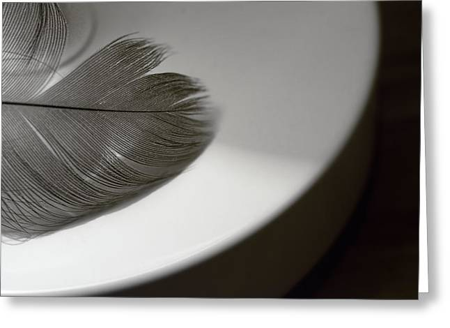 Feather On A White Circle Greeting Card by Mitch Spence