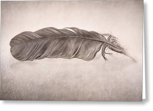 Feather Greeting Card by Scott Norris