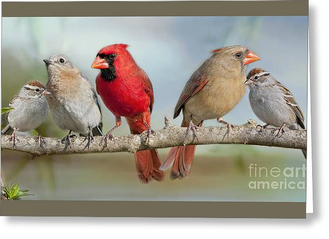 Birds On A Branch Greeting Cards - Feathered Fellowship Greeting Card by Bonnie Barry