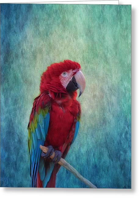 Feathered Friend Greeting Card by Kim Hojnacki