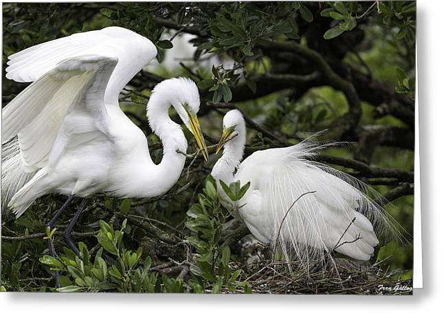 Cooperation Greeting Cards - Feathering Their Nest Greeting Card by Fran Gallogly