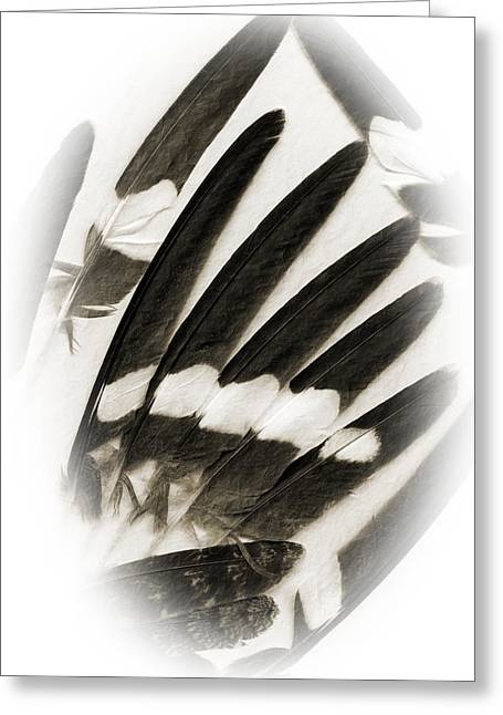 Night Hawk Greeting Cards - Feathers Greeting Card by Fred Lassmann