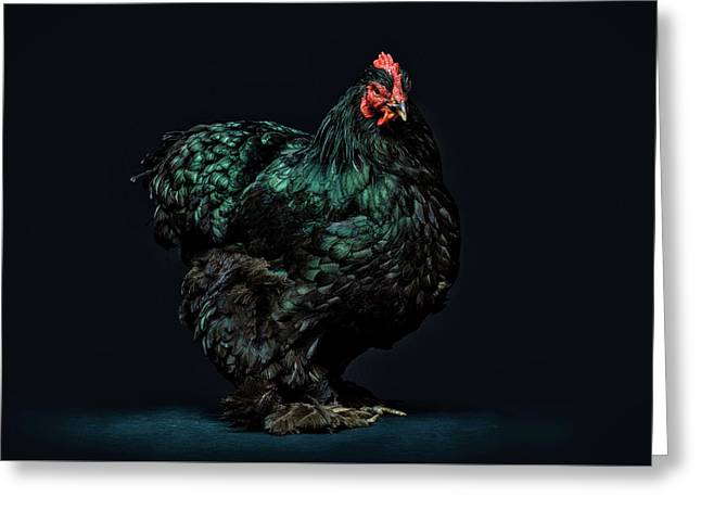 Feathers Greeting Card by John Towner