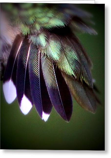 Purchase Greeting Cards - Feathers of a Hummer - 4520-002 Greeting Card by Travis Truelove