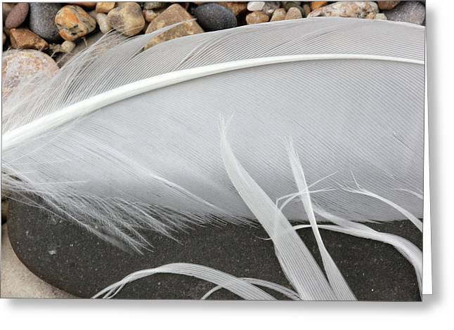 Feathers On The Beach 1 Greeting Card by Mary Bedy