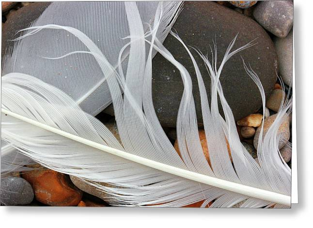 Feathers On The Beach 2 Greeting Card by Mary Bedy