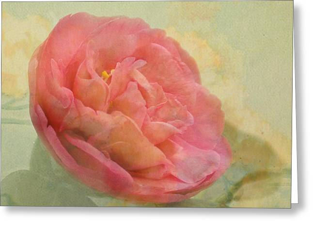 February Camellia Greeting Card by Cindy Garber Iverson