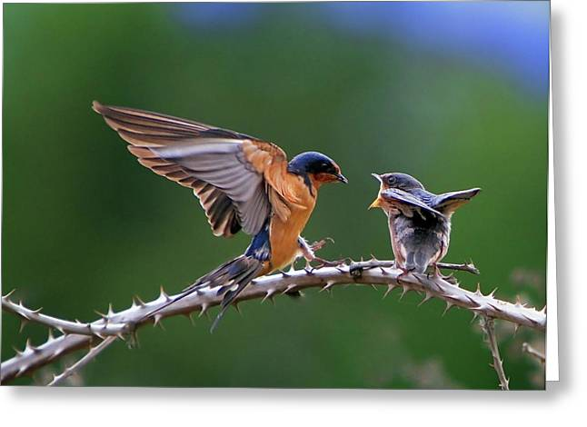 Feeding Birds Photographs Greeting Cards - Feed Me Greeting Card by William Lee