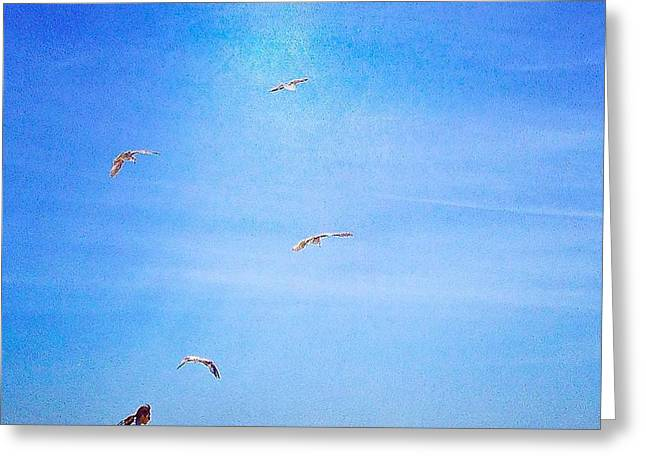 Flying Seagull Greeting Cards - Feed The Birds Greeting Card by Patricia Berger
