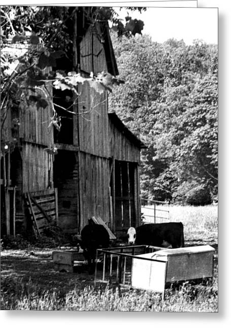 Tennessee Barn Greeting Cards - Feed Time Greeting Card by Kay Sawyer