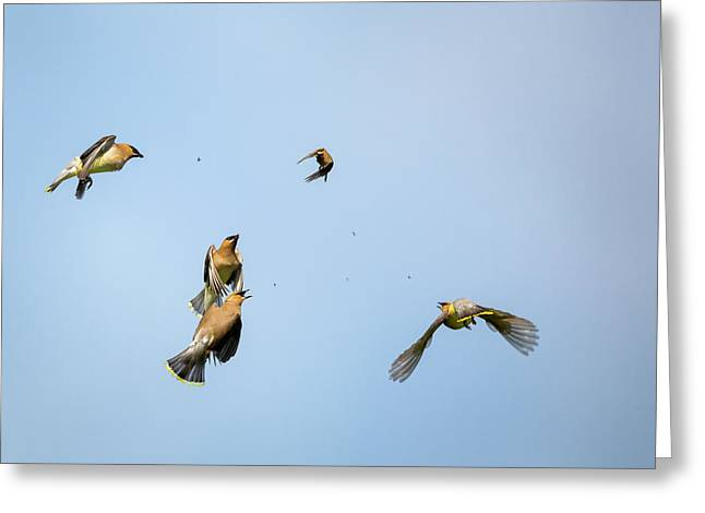 Feeding Frenzy Greeting Card by Bill Wakeley