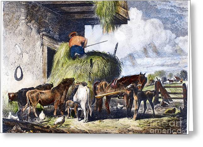 Hayloft Greeting Cards - Feeding Livestock, 1873 Greeting Card by Granger