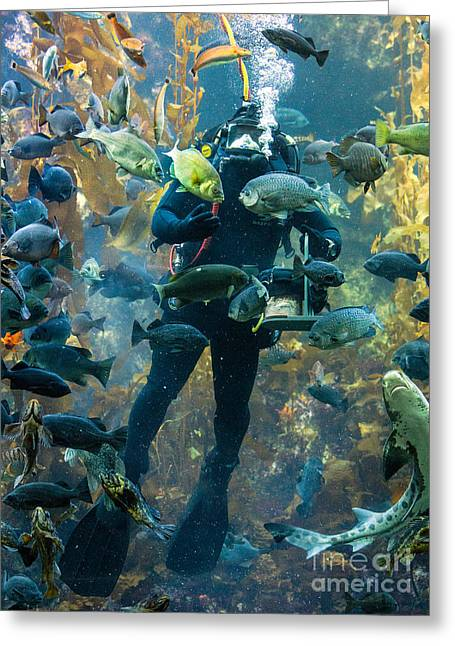 Leopard Shark Greeting Cards - Feeding Time at the Monterey Bay Aquarium Greeting Card by Jerry Fornarotto