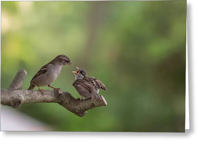 Hungry Chicks Greeting Cards - Feeding Time House Sparrows Greeting Card by Terry DeLuco