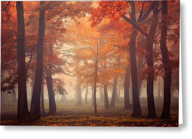 Fall Trees Greeting Cards - Feel Greeting Card by Ildiko Neer