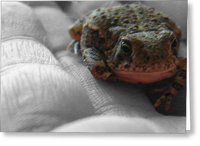 Amimal Greeting Cards - Feeling Froggy Greeting Card by Stacy Fowler